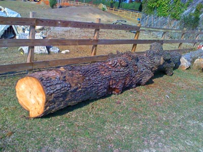 Finishing your own Walnut lumber
